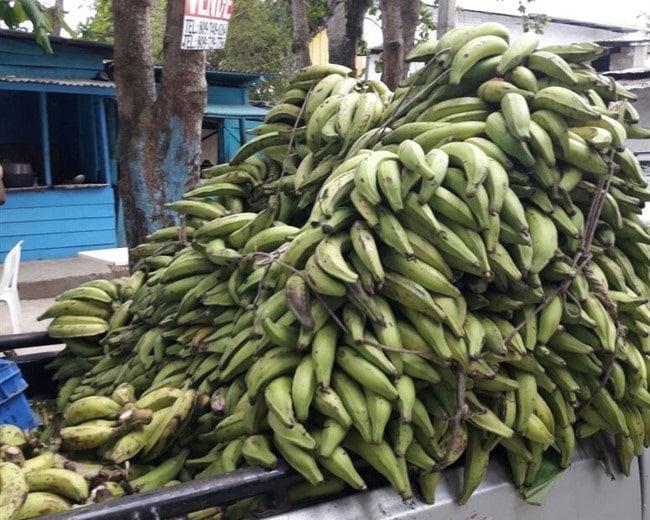 בננות ירוקות. בישראל לא אוכלים אותן אבל פה הן מעדן - עושים מהם צ'יפס טעים, פריך ומרנין